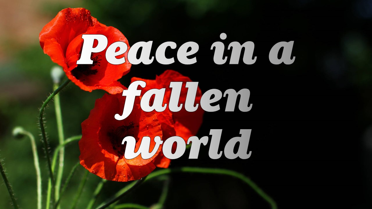Peace in a Fallen World